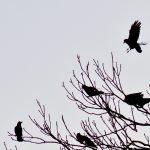 flocking #1