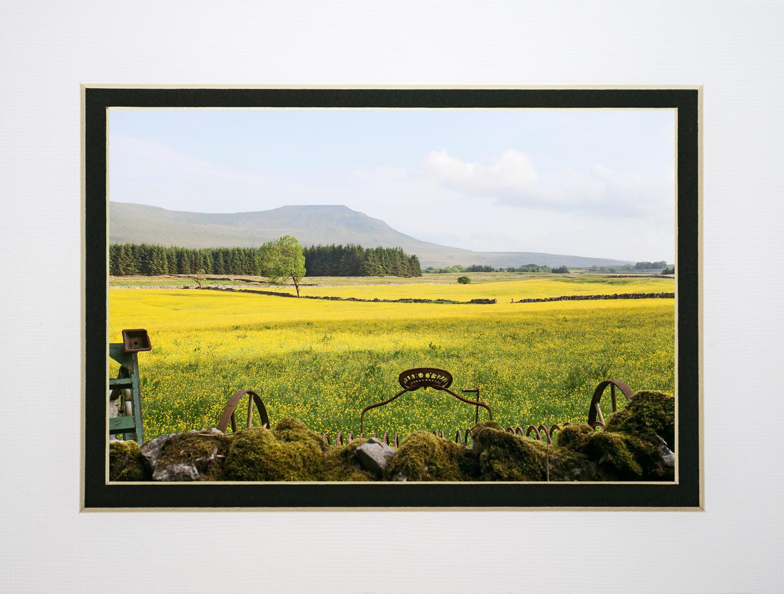 Buttercup meadows of Chapel le Dale