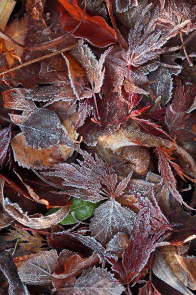 frost pocket #1