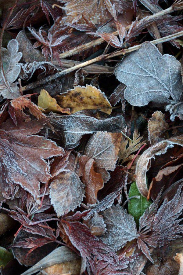 frost pocket #2